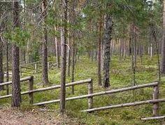 fence with young tree trunks Wattle Fence, Fence Gate, Garden Fencing, Garden Trellis, Garden Beds, Garden Landscaping, Pipe Fence, Landscape Design, Garden Design