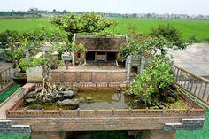Bonsai Art, Bonsai Garden, Bonsai Tree Types, Beautiful Vietnam, Mini Bonsai, House In Nature, Fish Ponds, Landscaping With Rocks, Water Features