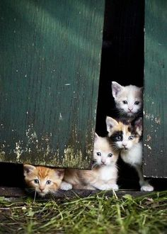 There Are Always Kittens On The Farm