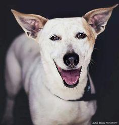 Por una sonrisa sincera - antua blonde photography -  fotógrafo solidario - barcelona - animal - fotos - reportajes - animal de compañía - maresme