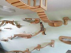 Cats Paradise...