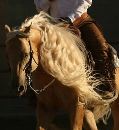 Reining- super awesome, and fun to ride