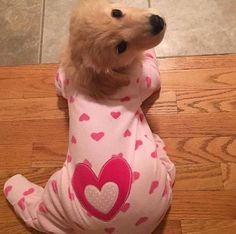 Things we all adore about the Intelligent Golden Retriever Puppies - Treue Seele - Perros Cute Little Puppies, Cute Dogs And Puppies, Baby Dogs, I Love Dogs, Doggies, Baby Puppies, Cute Labrador Puppies, Cute Animals Puppies, Puppies Tips