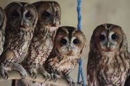 Long Cloaked in Mystery, Owls Start Coming Into Their Own - NYTimes.com