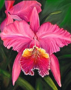 Cattleya, the National Flower of Colombia.