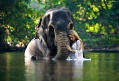 Słoń, Kobieta, Woda, Zieleń