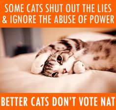 Some cats shut out the lies & ignore the abuse of power - better cats don't vote Nat