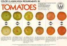 usda tomato ripeness color chart
