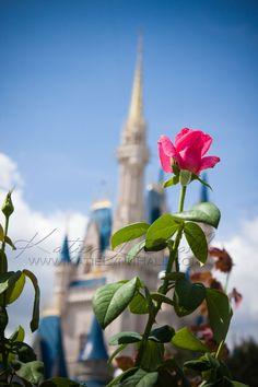 Walt Disney World Rose Garden    Where my husband proposed to me!