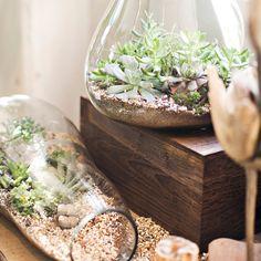 Aprenda a montar o seu próprio terrário, inspire-se com vários modelos diferentes e leve um pouco da natureza para dentro de casa.
