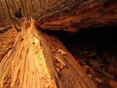 Wald in Ottakring, Vienna Vienna, About Me Blog