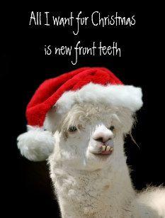 Alpaka Weihnachten Weihnachtspostkarte Lustige Weihnachtskarten