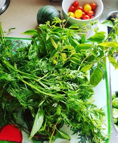 Carrot tops at the farmer's market and basil from the garden mean that a concoction option pesto will be happening in my kitchen!  #cooking #urbangarden