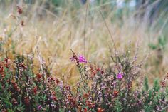 de rerum natura: carnets d'automne