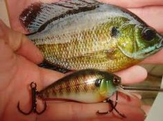 The crank bait seen here is meant to look and swim just like a blue gill; a favorite prey of big bass.not sure where or how much but I am buying. Bass Fishing Lures, Fishing Life, Gone Fishing, Kayak Fishing, Crappie Jigs, Lure Making, Bait And Tackle, Fishing Accessories, Fish Camp