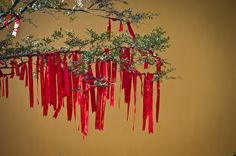 Good wishes for Chinese New Year hanging from a tree in Hanshan Temple, Suzhou. For more please visit www.d-watanabe.com