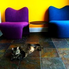 T.R. guards the waiting room. #OfficeCatTR
