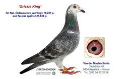 4272786-14 • Van der Maelen - Penne