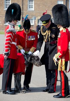 Royal Family Around the World: Prince William, Duke Of Cambridge Visits The 1st Battalion Irish Guards For The St. Patrick's Day Parade on March 17, 2016 in London, UK