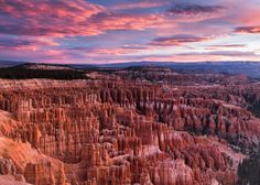 Hoodoos under a pink sky, Bryce Canyon National Park.