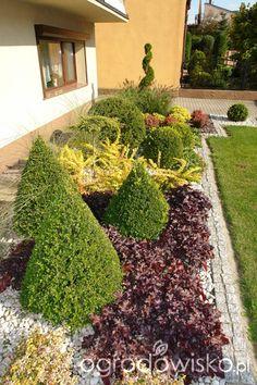Ogród mały, ale pojemny;) - strona 29 - Forum ogrodnicze - Ogrodowisko