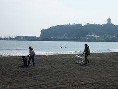 カメラワン撮影日記、最後は江ノ島だワン!
