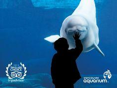 Vancouver Aquarium - Canada's largest Aquarium, located in Stanley Park. Tickets are $31/adult