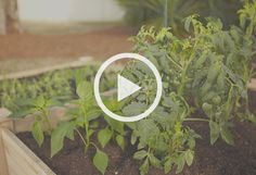 How To Make a Raised Bed Salsa Garden at The Home Depot