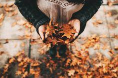 6 Reasons Why Fall Season Is The Best Season Fall Collection, Photo D Art, Autumn Cozy, Autumn Fall, Hello Autumn, Autumn Garden, Autumn Photography, Photography 101, Fall Photos