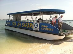 Our Sea Life Safari Boat Tour is one of the most popular activities here. You will search for dolphins, sea birds and other marine life on a 90-minute trip