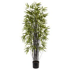 Black Bamboo Tree in Pot