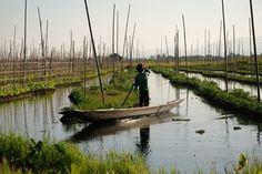 Giardini fluttuanti: un incontro alla scoperta delle coltivazioni sullacqua