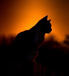 sunset cat   by creativegaz