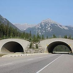 We have the world's safes highways (for animals)  There are million-dollar highway overpasses in Banff National Park which have been used by grizzly and black bears, wolves, coyotes, cougars, moose, elk, deer, bighorn sheep, wolverine and lynx. By 2014, there will be 38 wildlife underpasses and six overpasses from Banff National Park's east entrance to the border of Yoho National Park. Ontario built its first bridge for animals over Hwy 69, south of Sudbury, in 2012.