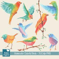 Clipart Pássaros Coloridos - Aquarela | Kika Digital | Elo7