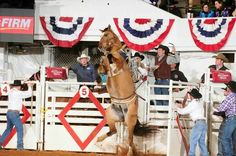 ❦ Fort Worth Stock Show & Rodeo Fort Worth Stock Show, Show Cattle, Cowboy And Cowgirl, Show Horses, Cowgirls, Livestock, Athletics, Rodeo, Cowboys