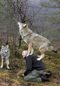 wolf on mans back howling ....... how weird can it get ...... well i think its cool but ...you know