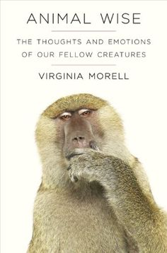 Animal Wise: The Thoughts and Emotions of Animals by Virginia Morell http://www.amazon.co.uk/dp/1906964912/ref=cm_sw_r_pi_dp_bOHexb0WMA7VS