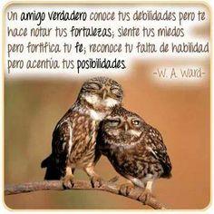 """Amigos del libro: """"El amanecer del Amor"""""""