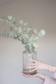 """Questro per me è l'anno della """"passione eucalyptus"""". Mi sono innamorata della sua foglia verde-grigia e del suo portamento elegante, un verde che pare quasi un fiore delicato. Devo attrezzarmi al più presto per aggiugere il suo profumo balsamico al fresco odore di bosco che già ci regala il pino. Le ispirazioni per un Natale …"""