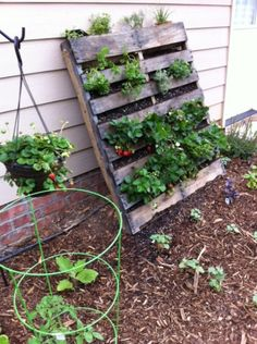 Pallet - angled garden planter? Nice and shabby-chic, great with trailing plants... strawberries?