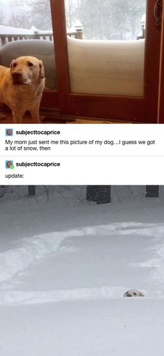 Funny Animal Memes, Funny Animal Pictures, Cute Funny Animals, Funny Cute, Funny Dogs, Funny Memes, Top Funny, Memes Humor, Lol So True