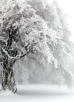 gorgeous snow scene