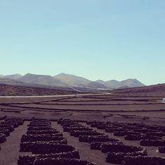 Viñas - La Geria - Lanzarote - España
