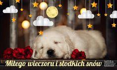 Miłego wieczoru. Na Dobranoc. #kartki #pocztówki #piesek #psy #dobranoc #polska #nadobranoc #sen Good Night Quotes, Cute Pictures, Humor, Mood, Cheer, Pretty Pictures, Ha Ha, Funny Humor, Lifting Humor