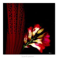 """Spanish Passion"" copyright by Elizabeth Mansco"