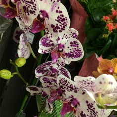Vibrant Orchid in our 10th & Reed store. #ACMEMarkets #Orchid