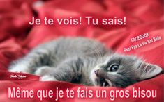 Good Night, Good Morning, Maine Coon, Cute Pictures, Messages, Animals, Blog, Gatos, Chat Board