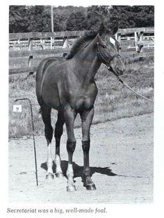Secretariat as colt 1970