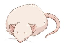 Pancaking: (verb) when your rat does the thing where it has no legs.